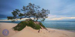 Carree Sand Blow, Sandy Cape, Fraser Island, Queensland